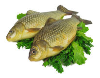 Raw crucian Royalty Free Stock Images