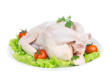 Raw crude chicken on a plate garnished with vegetables salad Stock Photography