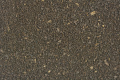 Raw crushed cocoa coffee beans Royalty Free Stock Image