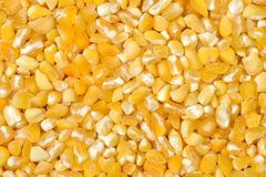 Raw crushed corn groats close up.  Stock Images