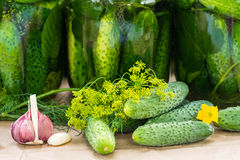 Raw cucumbers ,garlic and dill on the table Royalty Free Stock Photography