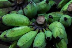 Raw cultivated banana. Bunch of raw green cultivated banana royalty free stock photos