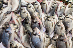 Raw cupra fishes for sale at market. Izmir, Turkey Stock Image