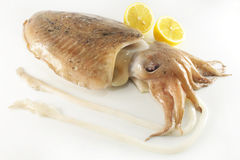 Raw cuttlefish Royalty Free Stock Images