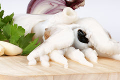 Raw cuttlefish with herbs Stock Image