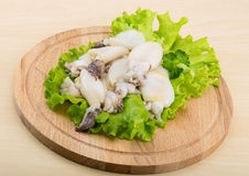 Raw cuttlefish Stock Photography