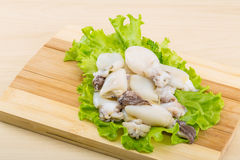 Raw cuttlefish Stock Images