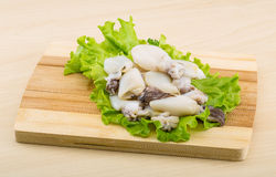 Raw cuttlefish Royalty Free Stock Photos