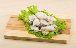 Raw cuttlefish Royalty Free Stock Photos
