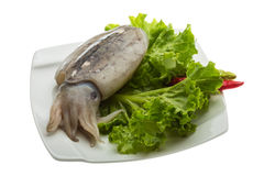 Raw cuttlefish. Ready for cooking Royalty Free Stock Photography