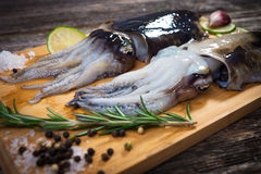 Raw cuttlefish Stock Image