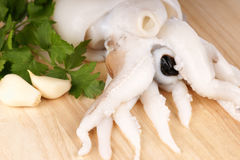 Raw cuttlefish Royalty Free Stock Photo