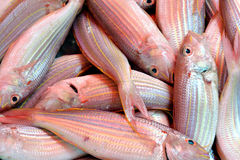 Raw dace fish Royalty Free Stock Images