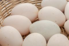 Raw dirty duck eggs in basket. On white background Stock Images