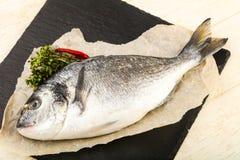 Raw dorada fish. Ready for cooking Stock Photos