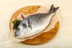 Raw dorada fish. Ready for cooking Stock Photography