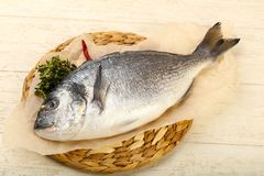 Raw dorada fish. Ready for cooking Stock Images