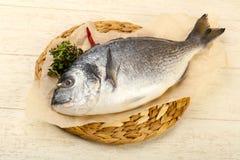 Raw dorada fish. Ready for cooking Stock Photo