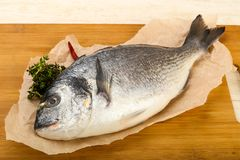 Raw dorada fish. Ready for cooking Stock Image