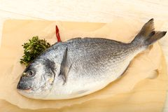 raw dorada fish royalty free stock photography