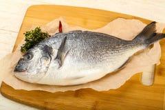 Raw dorada fish. Ready for cooking Royalty Free Stock Photos
