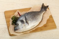 Raw dorada fish. Ready for cooking Royalty Free Stock Photo