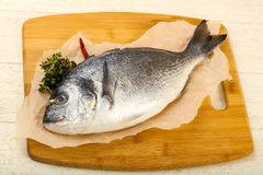 Raw dorada fish. Ready for cooking Royalty Free Stock Image