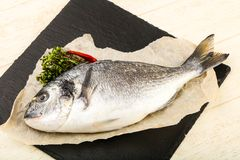 Raw dorada fish. Ready for cooking Royalty Free Stock Photography