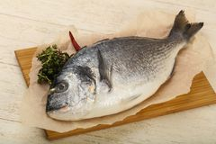 Raw dorada fish. Ready for cooking Royalty Free Stock Images
