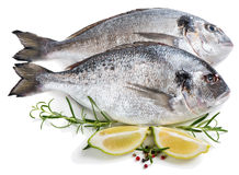 Raw dorada fishes (Sparus aurata L.) Stock Photography