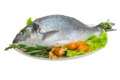 Raw dorada Royalty Free Stock Photo