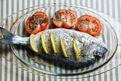 Raw dorada ready for roasting Stock Images