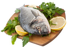 Raw dorado fish with hebs and lemon Stock Photos