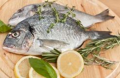 Raw dorado fish with herbs and lemon Royalty Free Stock Photography