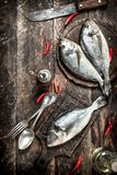 Raw Dorado fish with hot chili peppers. On a wooden background Stock Photography