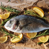 Raw dorado fish with rosemary and sea salt. Server on old paper Royalty Free Stock Photography