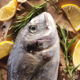 Raw dorado fish with rosemary and sea salt. Server on old paper Stock Images
