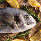 Raw dorado fish with rosemary and sea salt. Server on old paper Royalty Free Stock Photos
