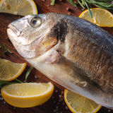 Raw dorado fish with rosemary and sea salt. Server on old paper Royalty Free Stock Images