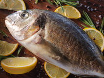 Raw dorado fish with rosemary and sea salt Royalty Free Stock Photo