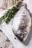 Raw dorado fish with rosemary Royalty Free Stock Images