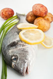 Raw dorado fish with vegetables Stock Images