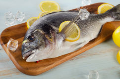 Raw dorado with lemon on  a cutting board.  Stock Image