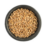 Raw Dry Wheat Grain Grains Heap in Black Iron Bowl. Top View Closeup Isolated Stock Image