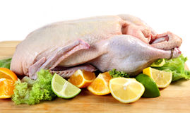 Raw duck with citrus fruits Stock Image