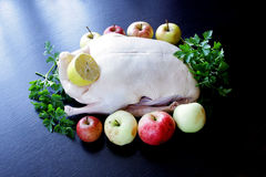 Raw duck drake ready to cook with vegetables and apples Stock Image