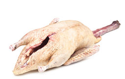 Raw duck. Isolated on white Stock Images
