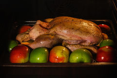 Raw duck in oven ready for cooking. Raw duck with apples and oranges in oven ready for cooking Stock Photos
