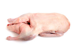 Raw duck. On a white background Royalty Free Stock Image