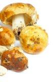 Raw Edible Mushrooms Royalty Free Stock Photos